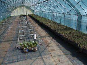 0008 First Seedlings In 2018