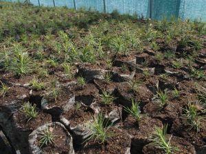 0009 First Seedlings In 2018