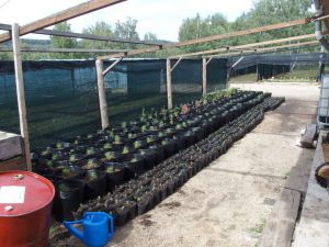 0053 Forest Nursery In August