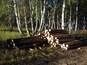0069 Poles For Seed Orchard