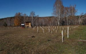 0073 Planted Clonal Archive Of Melliferous Willows