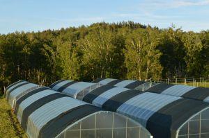 35 Greenhouses