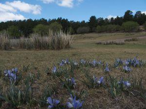 3 Iris Lactea