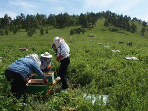 49 Beekeepers