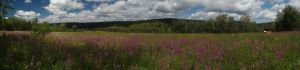 55 Summer Panorama From The Forest Nursery Domogt Sharyn Gol