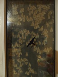 65 Gypsy Moth (Limantri Dispar) Invasion