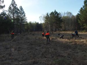 9 Reforesting Apprentices