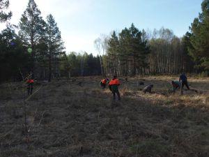 9 Reforesting Apprentices